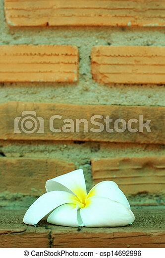 White flower against a brick wall. - csp14692996