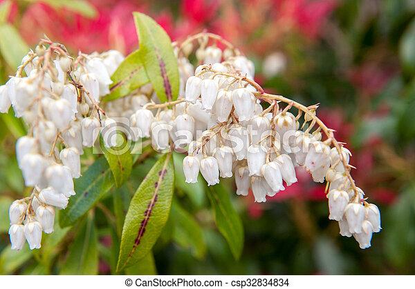 White flower bells small white bell shape wild flowers white flower bells csp32834834 mightylinksfo