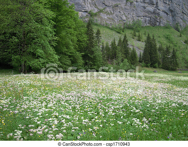 White flower field small white flowers dot a field in stock white flower field csp1710943 mightylinksfo