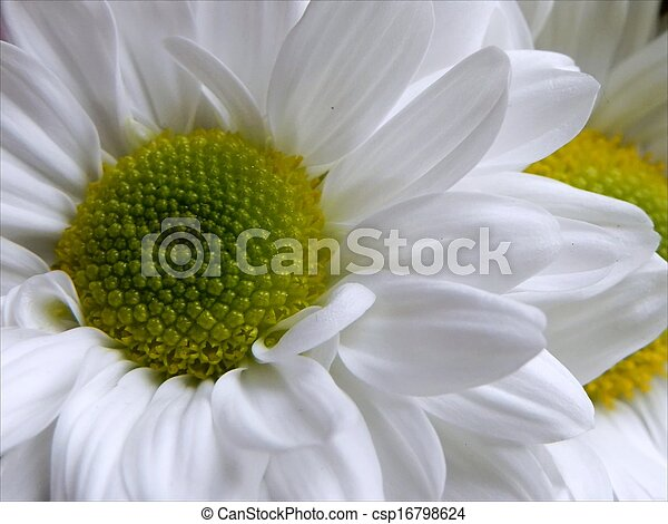 White flower with green center in the freshness pose with same white flower with green center csp16798624 mightylinksfo