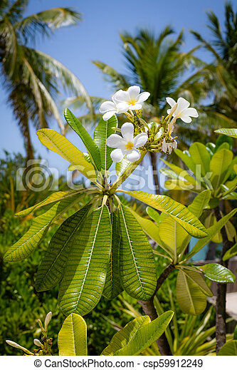 White Flowers Bahamas A Close Up Look At Small White Flowers With