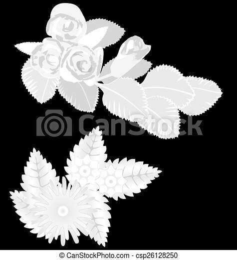 White flowers isolated on black - csp26128250