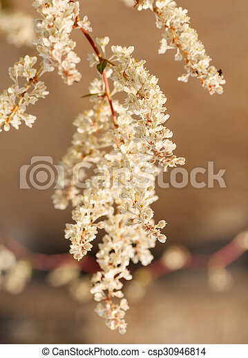 white flowers on a branch - csp30946814