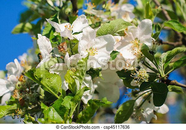 White flowers on branches spring tree white flowers on the white flowers on branches spring tree csp45117636 mightylinksfo