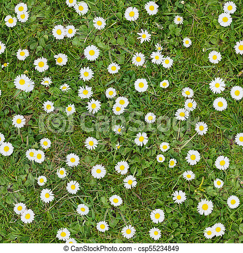 White flowers on the lawn top view seamless texture background white flowers on the lawn top view seamless texture background csp55234849 mightylinksfo
