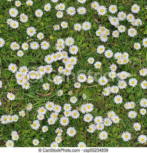 White flowers on the lawn top view seamless texture background white flowers on the lawn top view seamless texture background csp55234839 mightylinksfo
