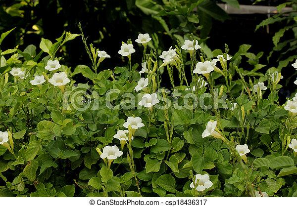 White flowers. - csp18436317