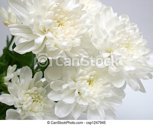 white flowers - csp1247945