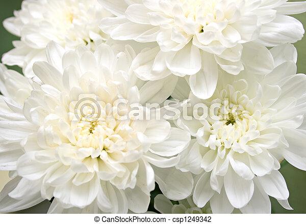 white flowers - csp1249342