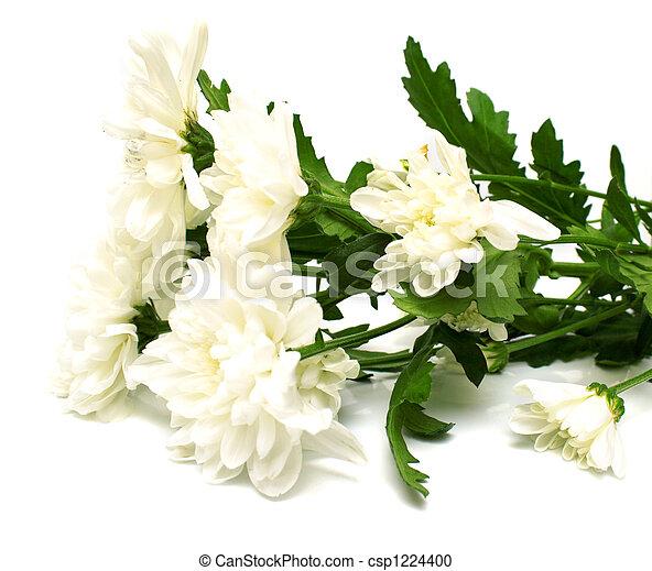 white flowers - csp1224400