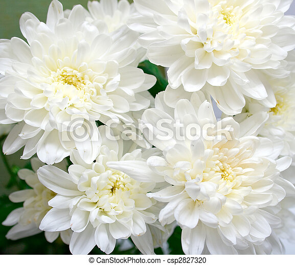 white flowers - csp2827320