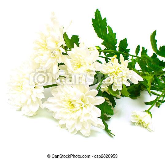 white flowers - csp2826953