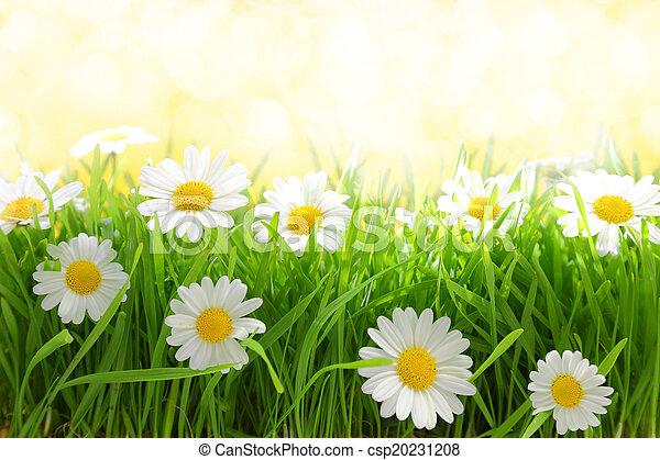 White flowers with grassy field on sunshine stock photography white flowers with grassy field on sunshine csp20231208 mightylinksfo
