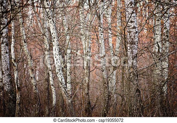 White forest - csp19355072