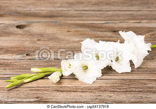 White gladiolus flower fresh white gladiolus flowers over wooden white gladiolus flower csp54137918 mightylinksfo