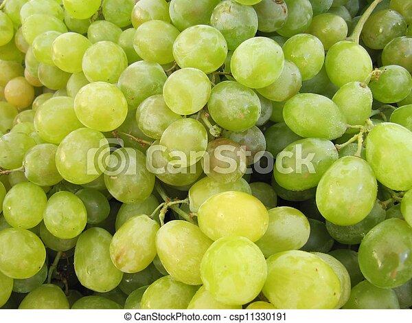 White grape harvest. - csp11330191