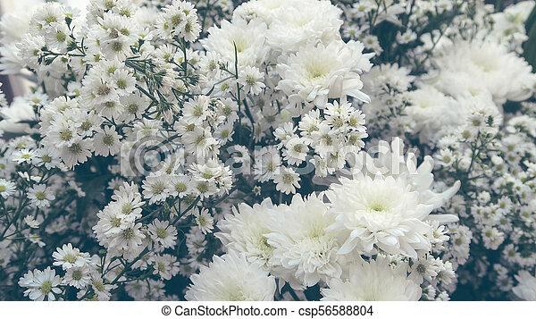 White gypsophila background white gypsophila csp56588804 mightylinksfo