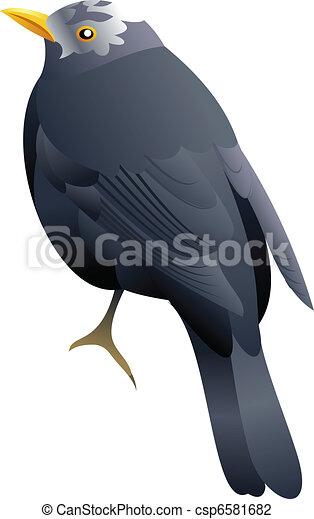white headed black bird - csp6581682