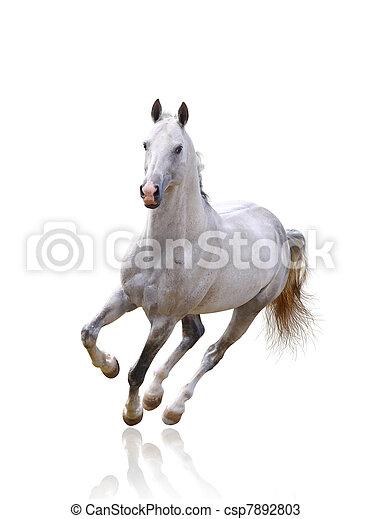 white horse isolated - csp7892803