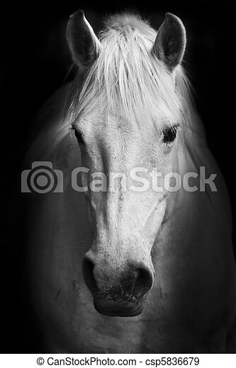 White horse's portrait - csp5836679