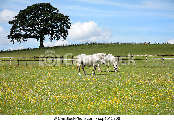 White Horses - csp1515709