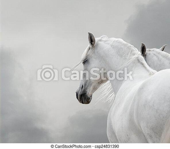 white horses - csp24831390