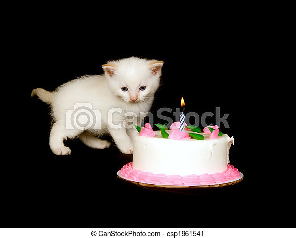 Astonishing White Kitten And Birthday Cake A White Kitten Stands Near Funny Birthday Cards Online Necthendildamsfinfo