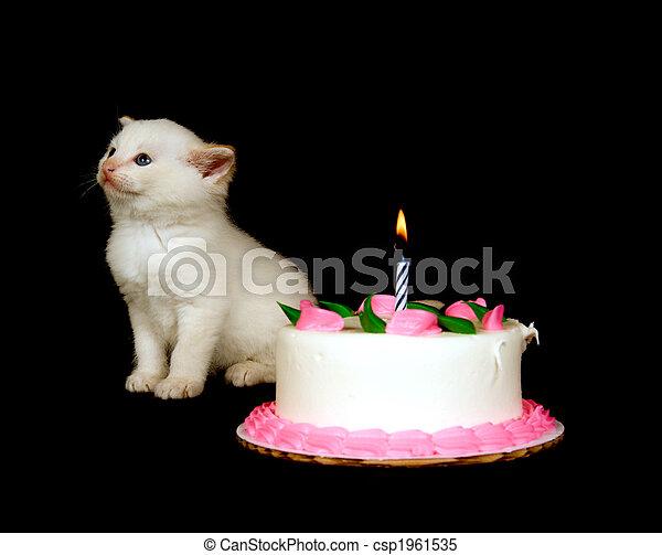 Fine White Kitten And Birthday Cake A White Kitten Stands Near Funny Birthday Cards Online Necthendildamsfinfo