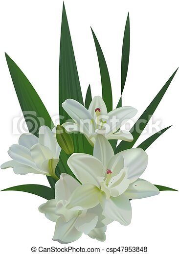 White lily bouquet flowers isolated - csp47953848
