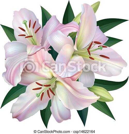 White Lily - csp14622164