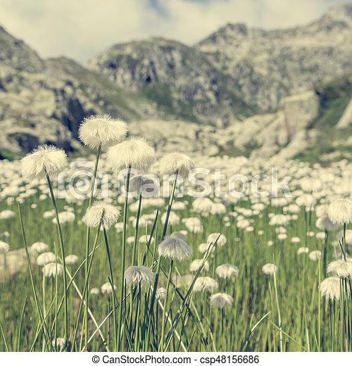 White mountain flowers lush meadow in brenta dolomites mightylinksfo