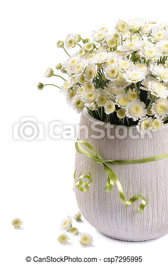 White Mums Flowers Isolated Over White Background