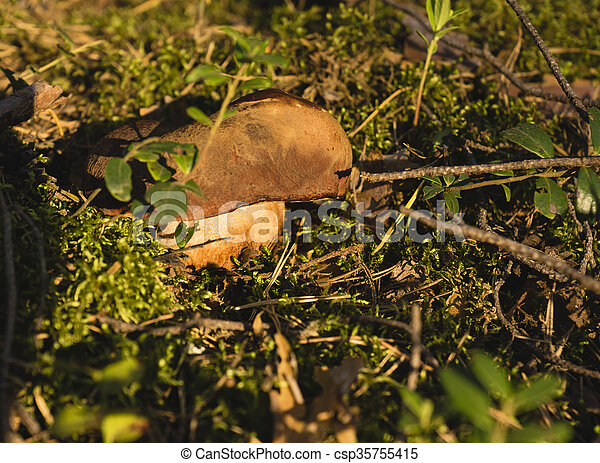 White mushroom growing in the forest. - csp35755415