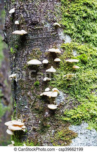 White Mushrooms and Moss on Tree - csp39662199