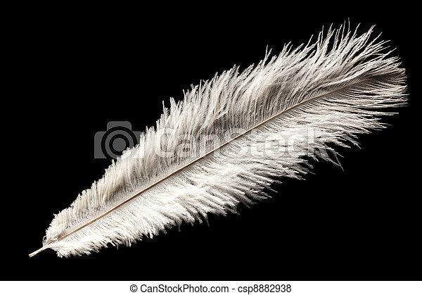 white ostrich feather - csp8882938