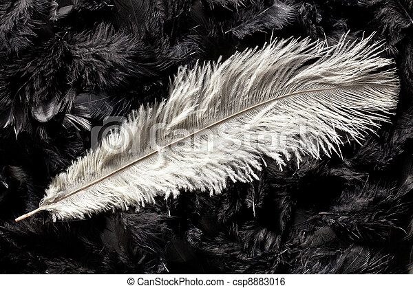white ostrich feather - csp8883016