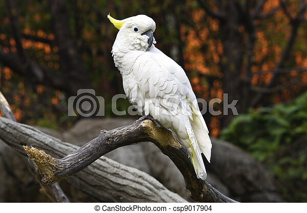 White parrot on a branch - csp9017904