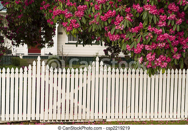White picket fence with fallen blossom - csp2219219