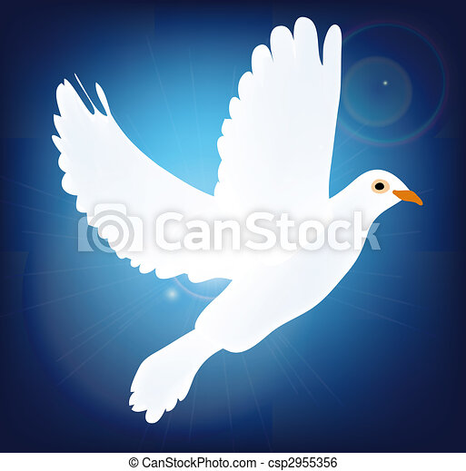 White Pigeon On Blue Background Symbol Of Peace Pigeon Stock