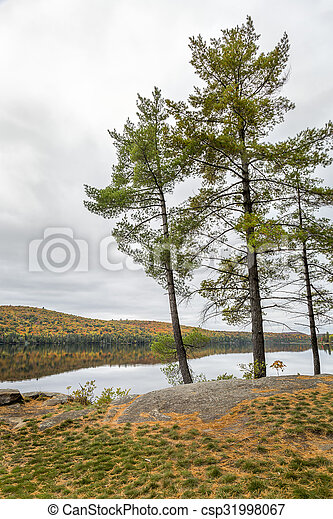 White Pine Trees Bordering a Lake in Autumn - Ontario, Canada - csp31998067