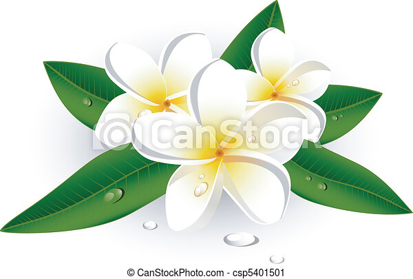 white plumeria frangipani over white eps 8 ai jpeg rh canstockphoto com free plumeria clipart plumeria clipart black and white