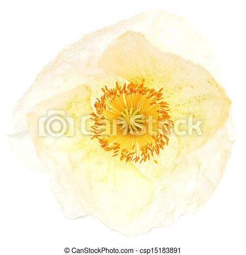 White poppy - csp15183891