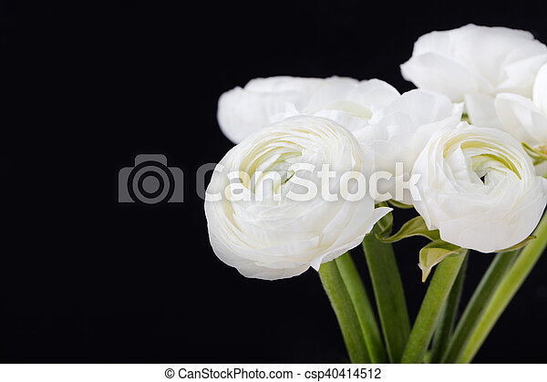White ranunculus flowers in a ceramic vase black background stock white ranunculus flowers in a ceramic vase black background copy space csp40414512 mightylinksfo Image collections