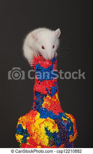 white rat on the bottle - csp12210882
