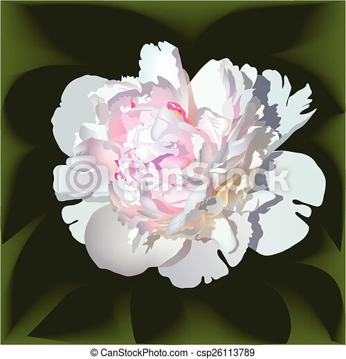 White realistic paeonia flower with pink center.