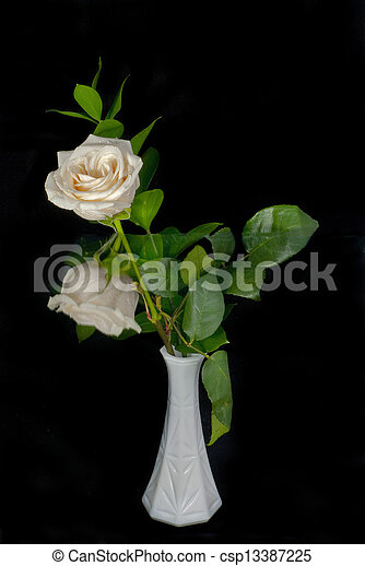 White Rose and Reflection - csp13387225