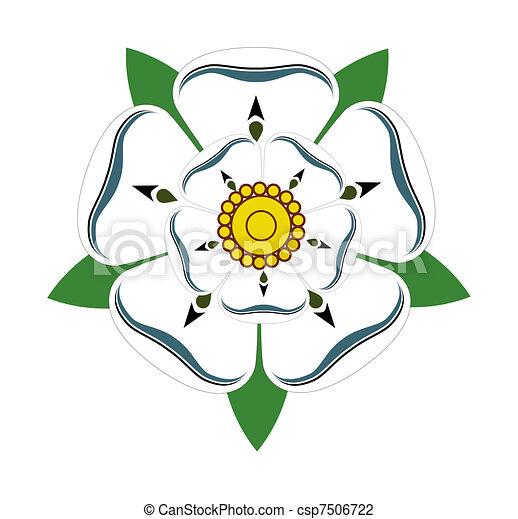 White rose of Yorkshire - csp7506722