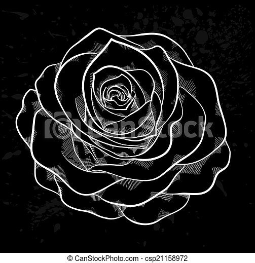 white rose outline with gray spots on a black background. - csp21158972