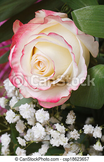White rose with pink edges with babys breath flowers delicate white rose with pink edges with babys breath flowers csp18623657 mightylinksfo