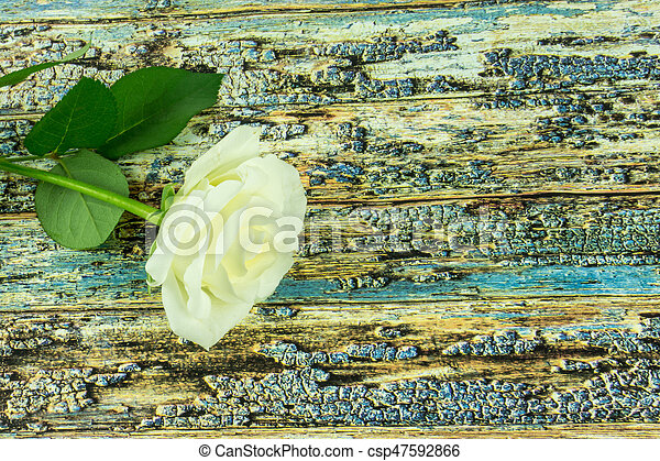 White roses on a colored wooden background - csp47592866
